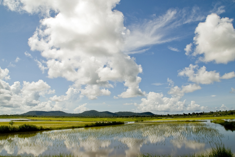 Cambodia - Rice Fields by sevenths