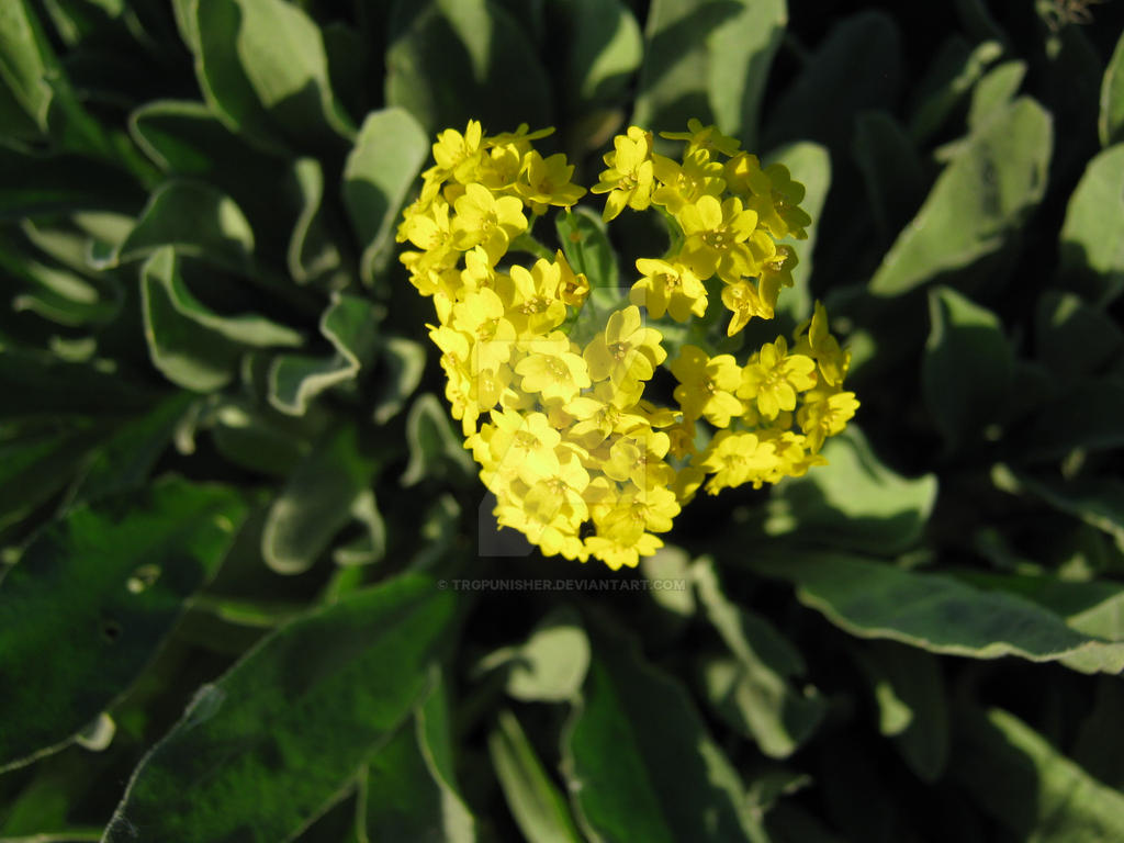 Yellow flowers 8 by trgpunisher on deviantart yellow flowers 8 by trgpunisher mightylinksfo