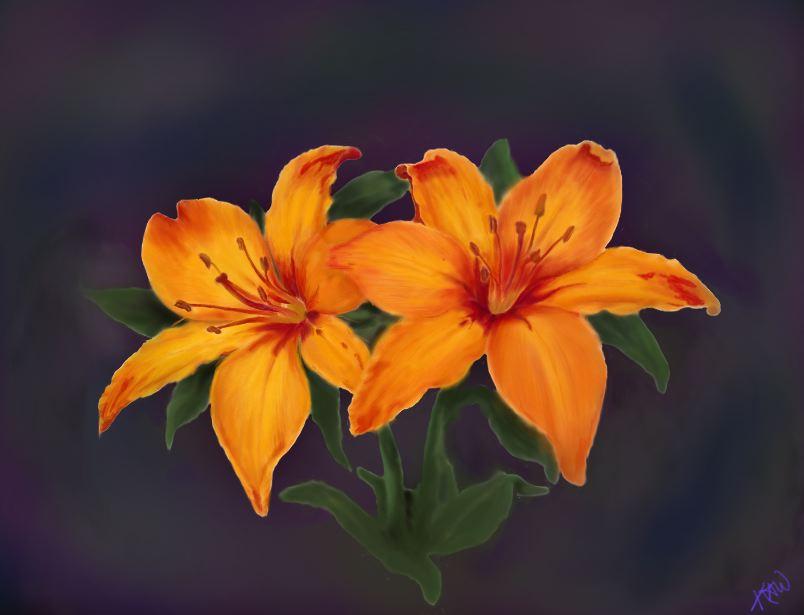 Orange Lilies by kris797
