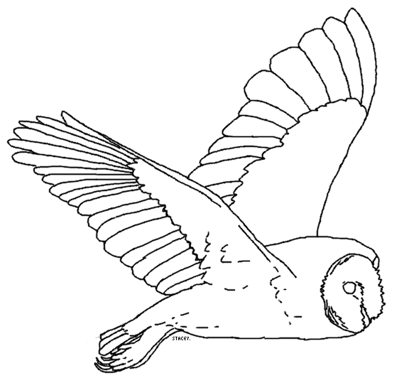 Line Art Owl : Barn owl lineart by ehlowel
