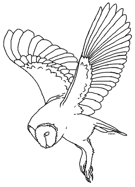 Barn owl lineart 3 by ehlowel on deviantart for Barn owl coloring pages
