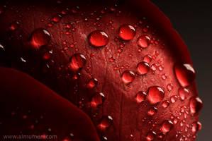Love Drops by almumen