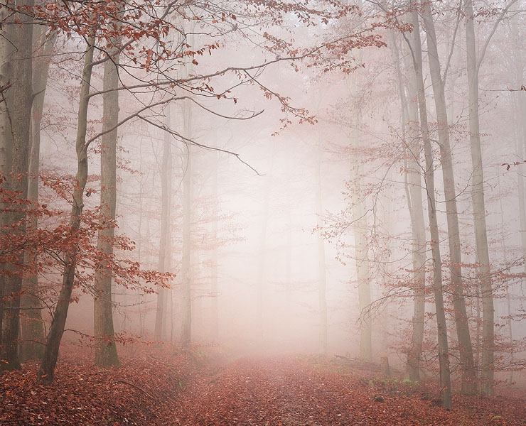 Light Passage 1 by almumen