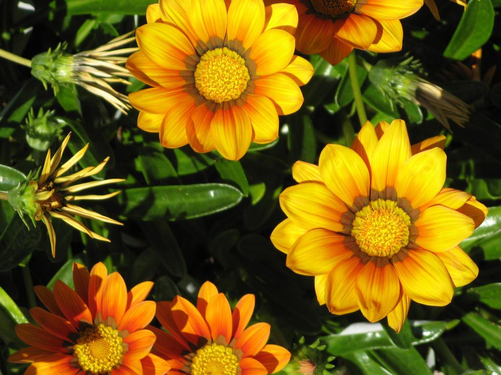 yellow daisy 1 by fa-stock