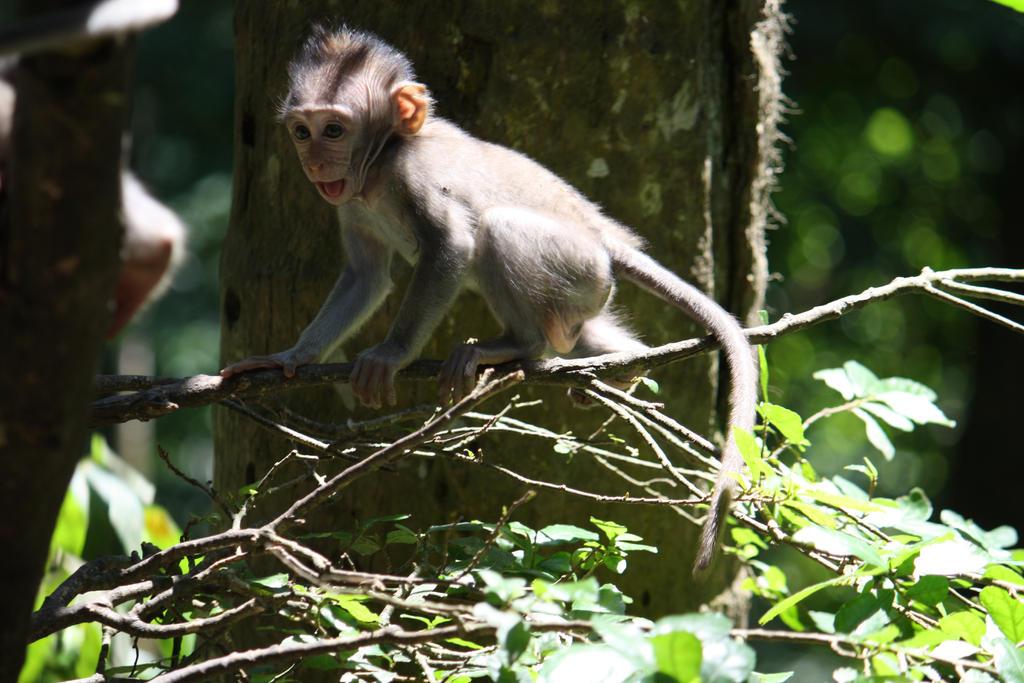 Monkey 6907 by fa-stock