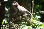 Monkey 6907