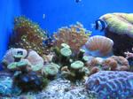 under the sea 37