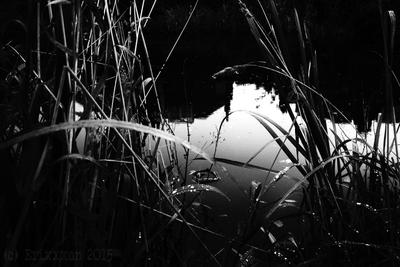 Dark Reeds by theErixxxon