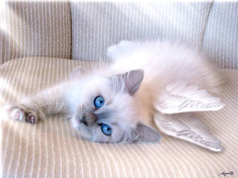 Little Angel by megcat