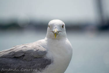 Seagull by mandeax