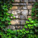Up Against the Wall-post by FortuneFoundTheSun63