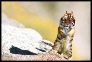Tigermunk by jeturcotte
