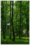 stromy by petrpedros
