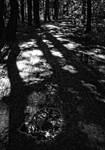 Krcsky les by petrpedros
