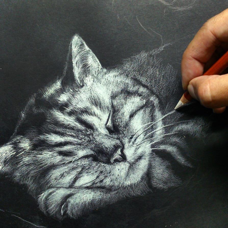 Cat by Michael-Chiu-2013