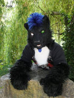 Skoll the Wolf
