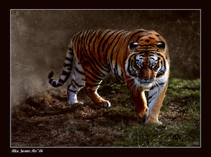 WILD by EquusAhu by Zoo-photographers