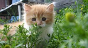 In grass by Sashich
