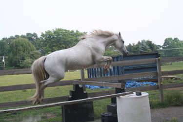 Patrick Free Jump 2 by BellaNotte-Stock