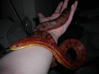 Serpentine by asha-dragon