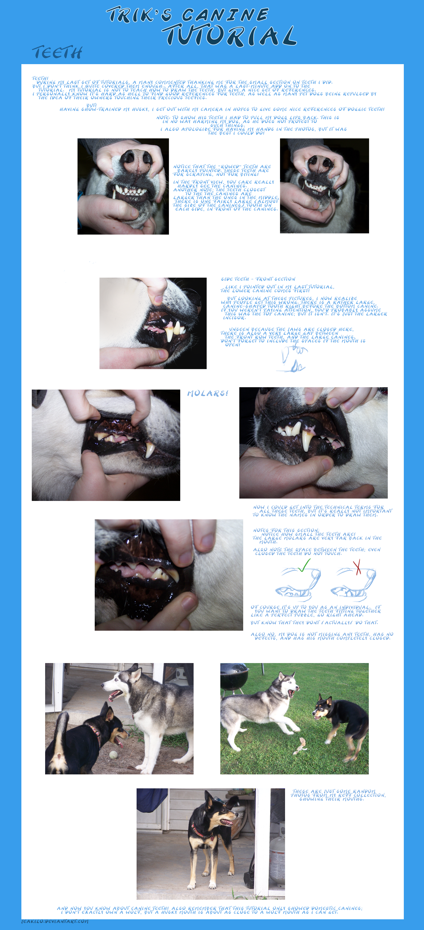 Trik's Canine Tutorial: Teeth by Jeakilo