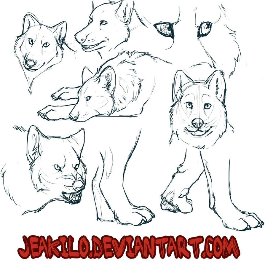 Wolf Study 2 by Jeakilo