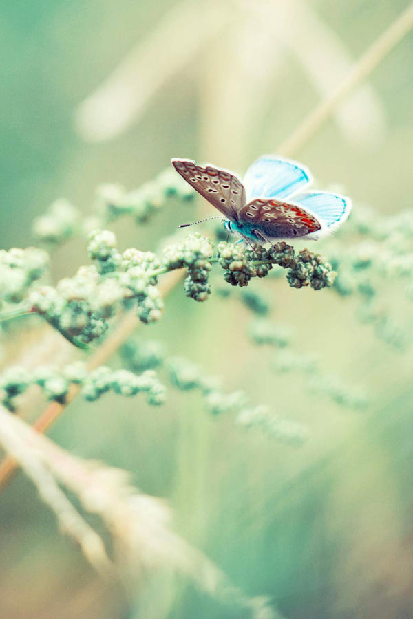 butterfly by annasizova