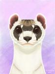 [iPad] Black-Footed Ferret Portrait