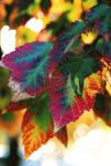Christmas in autumn