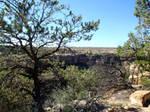 Mesa Verde 115
