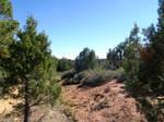 Mesa Verde 118
