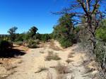 Mesa Verde 119