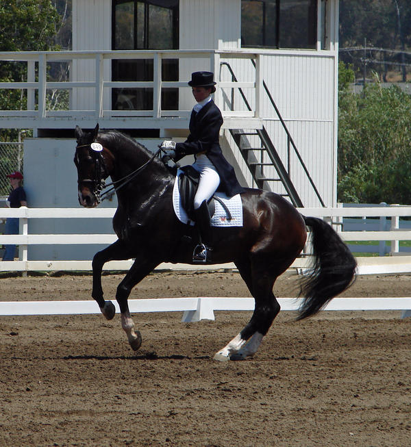 Konji :) Dressage__Pirouette_by_SkyeDragon_Designs