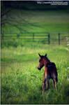 curious foal