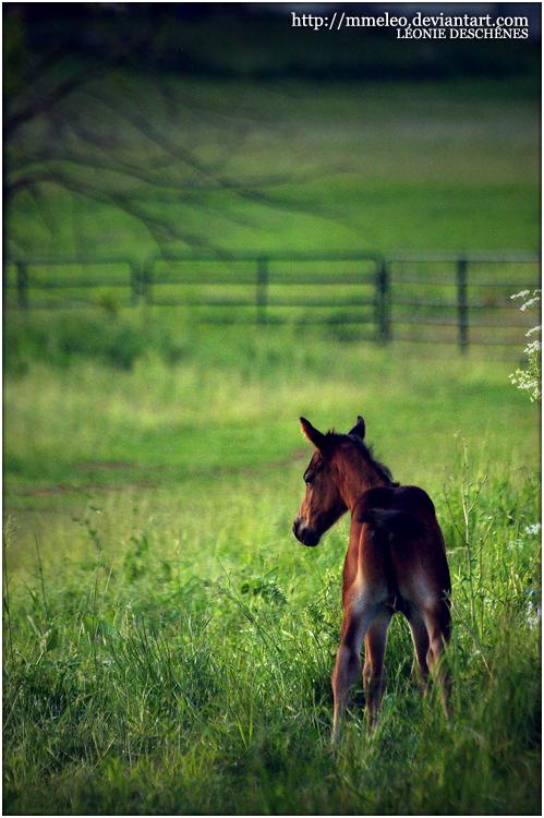 C h a r m . I l l u s i o n . G a l l e r y . Curious_foal_by_mmeleo-d2yjowb