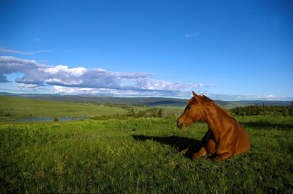 C h a r m . I l l u s i o n . G a l l e r y . Horse_in_his_liberty_by_mmeleo-d2z78gj