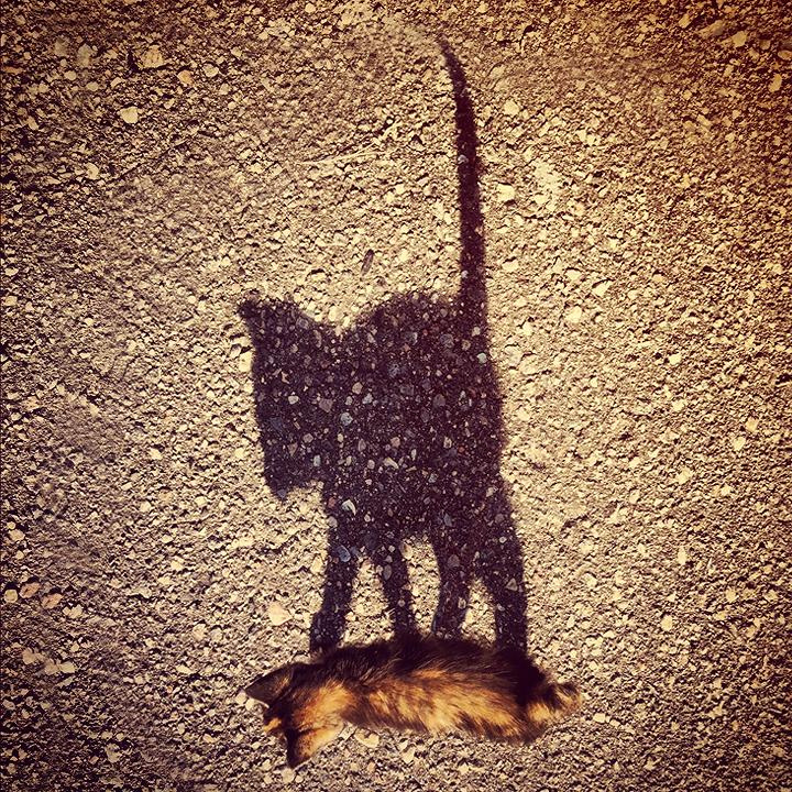 Shadow by MmeLeo