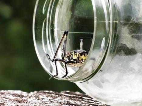 Grasshopper -- 7-31-09 - 1