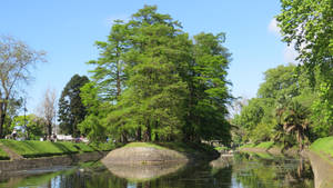 Islet of trees