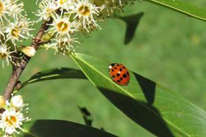 Kindly ladybug