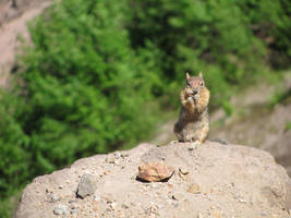 Crater Lake Critter