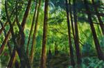 Redwood Glow I