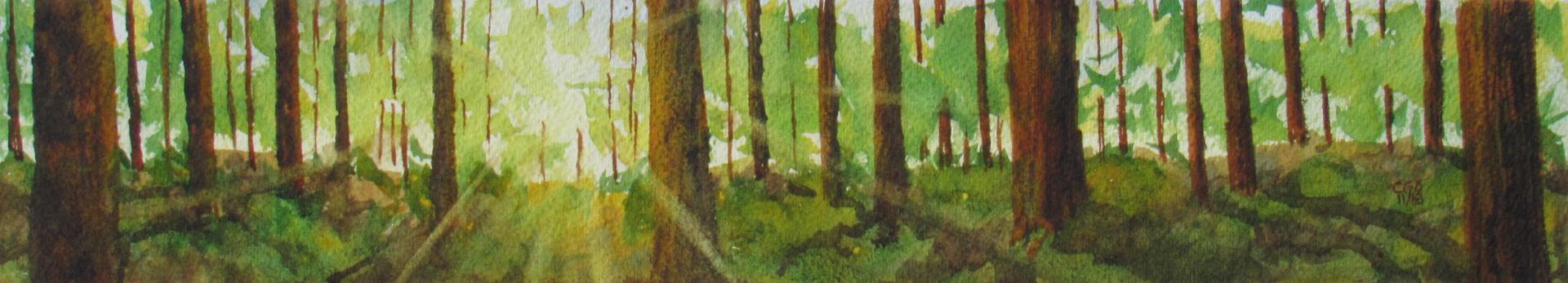 Sunlight through Redwoods