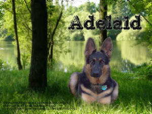 Adelaid