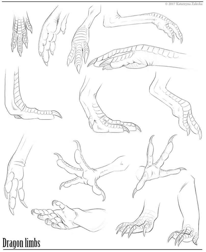 Dragon limbs reference by Sythgara