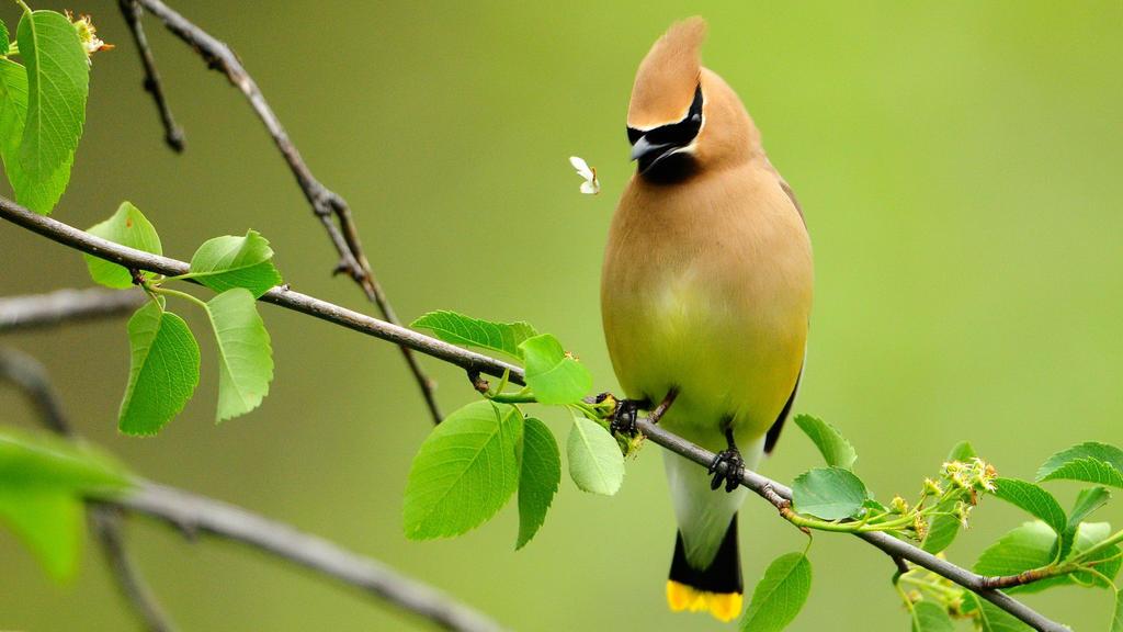 birdie 07 by 123456kamumember