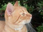 Gato again