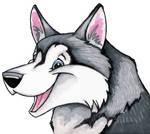 Happy Siberian Husky Portrait