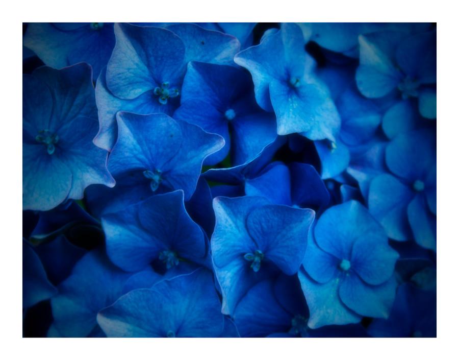 Flowers by skypho