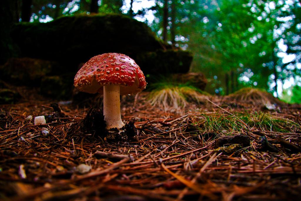 Mushroom by skypho